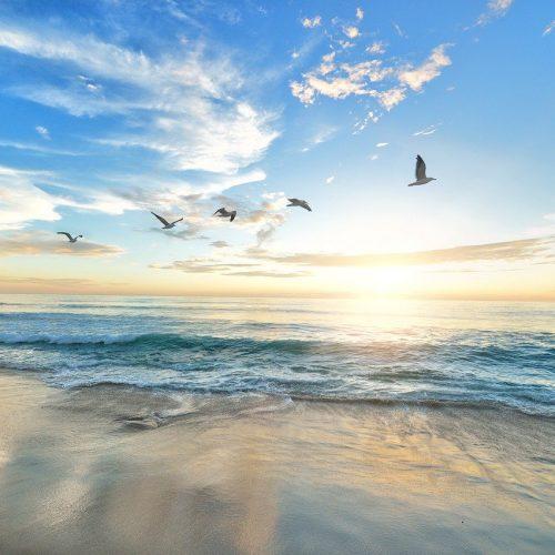 beach, birds, dawn